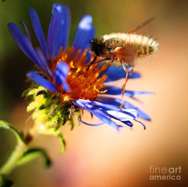 Wall Art - Photograph - Fly And Flower by Frank Piercy