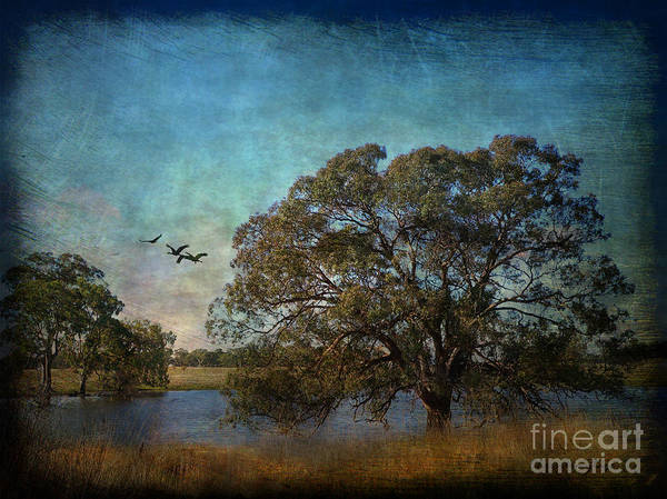 Photograph - Fly Away ... by Chris Armytage