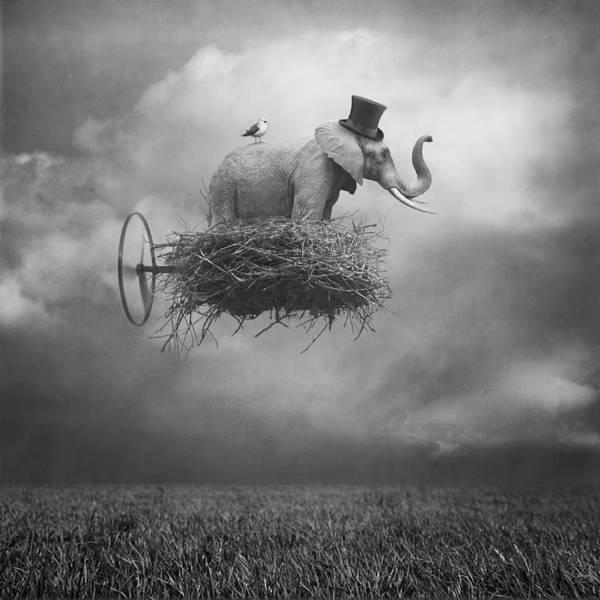Manipulation Wall Art - Digital Art - Fly by Beata Bieniak