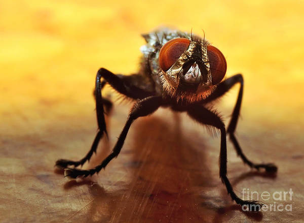 Ugly Photograph - Fly Eyes by Kaye Menner
