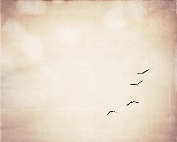 Wall Art - Photograph - Fly Fly Away by Carolyn Cochrane