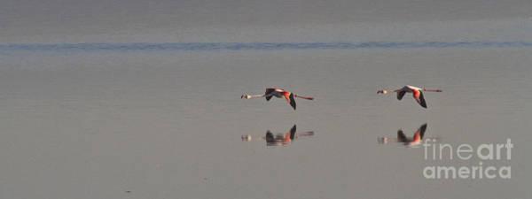 Photograph - Fly Fly Away My Pretty Flamingo by Heiko Koehrer-Wagner