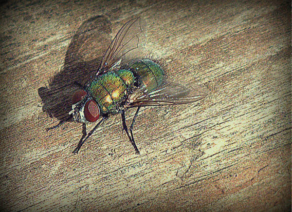 Photograph - Fly Impressions by Suzy Piatt