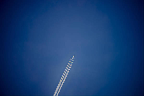 Photograph - Fly by Ivan Slosar