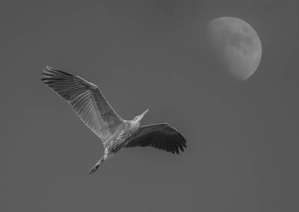 Photograph - Fly Me To The Moon by Loree Johnson