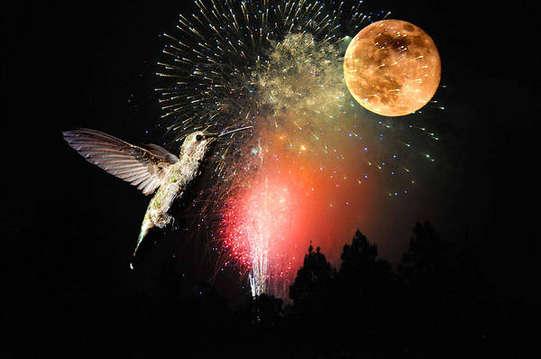 Photograph - Fly Me To The Moon by Lynn Bauer