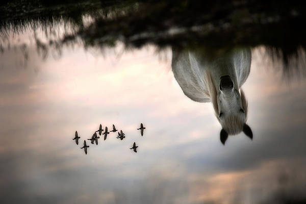 Puddle Wall Art - Photograph - Fly by Milan Malovrh