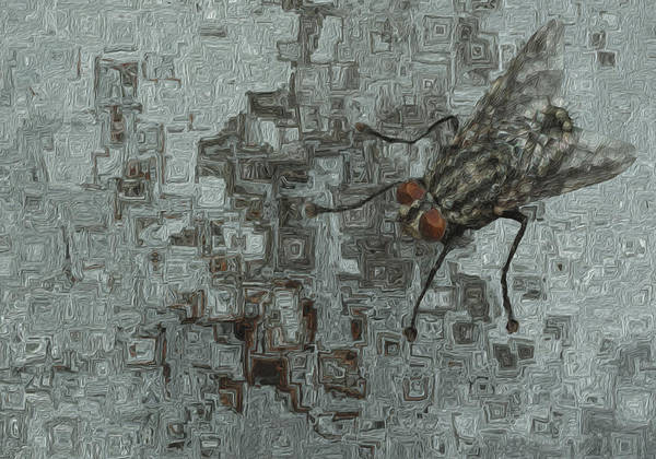 Reference Wall Art - Painting - Fly On The Wall by Jack Zulli
