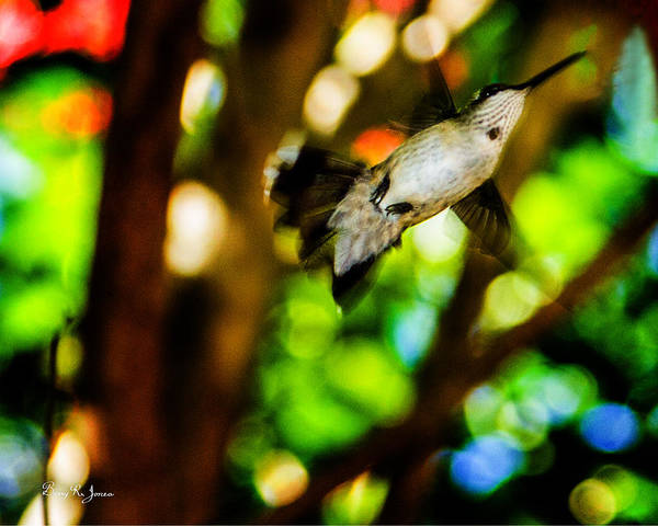 Photograph - Hummingbird - In Flight - Flyby by Barry Jones