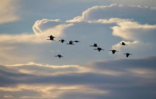 Photograph - Flying At Sunset by Cynthia Guinn
