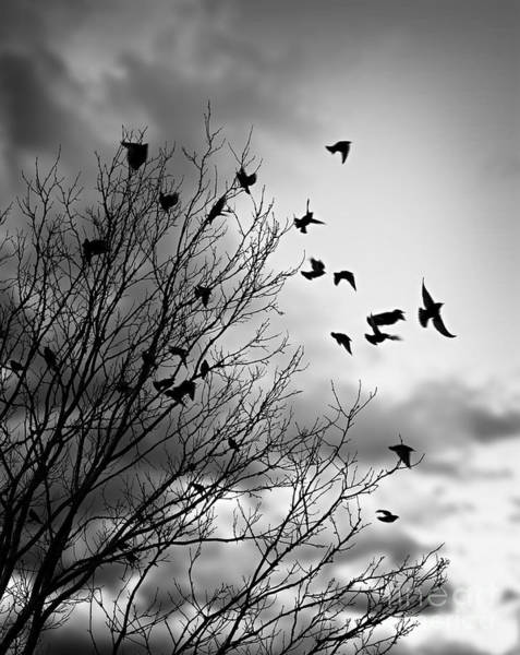 Photograph - Flying Birds by Elena Elisseeva