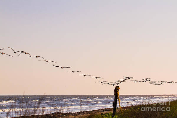 Wall Art - Photograph - Flying Brown Pelicans In The Evening Sky by Ellie Teramoto