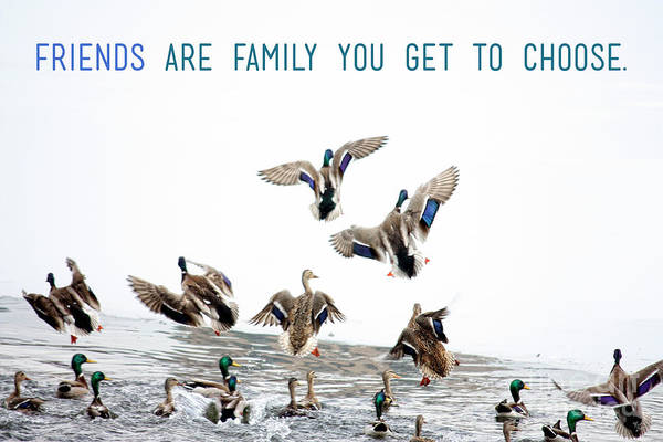 Quotation Photograph - Flying Ducks And A Friends Quote by Nishanth Gopinathan