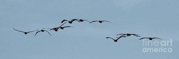 Wall Art - Photograph - Flying Flock Of Pelicans by Scott Cameron