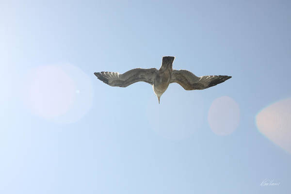 Photograph - Flying Free by Diana Haronis