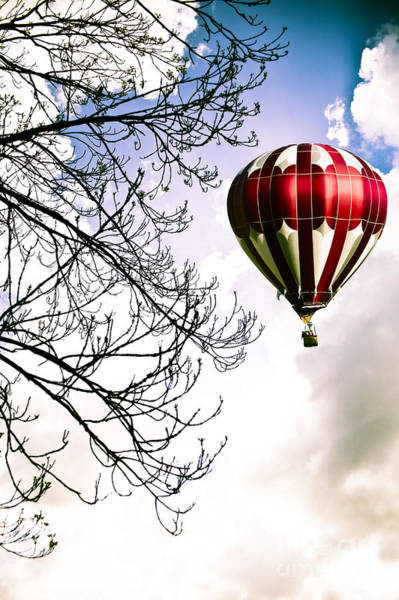 Wall Art - Photograph - Flying High by Jan Bickerton