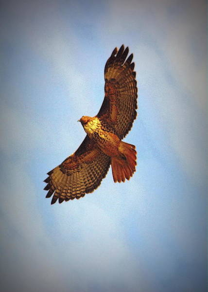 Photograph - Flying High by Rima Biswas