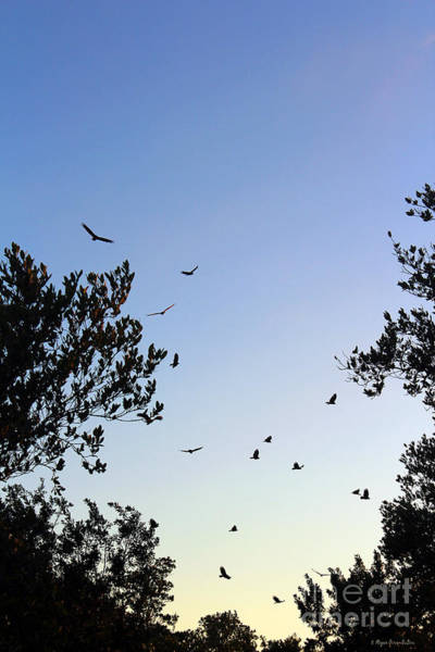Photograph - Flying In To Roost by Megan Dirsa-DuBois