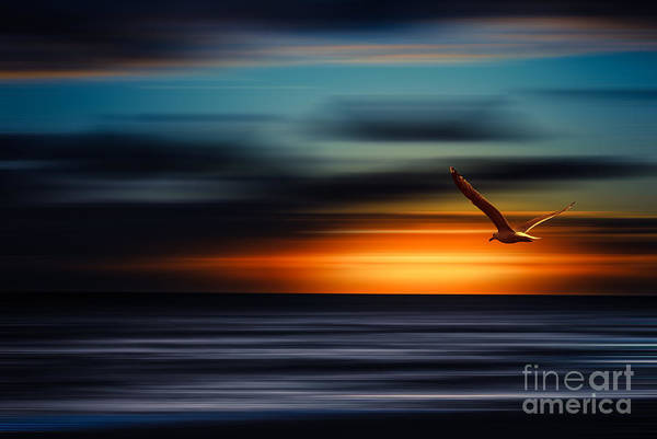 Photograph - Flying Into The Sunset by Hannes Cmarits