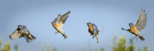 Bird Feed Photograph - Flying by Jean Noren