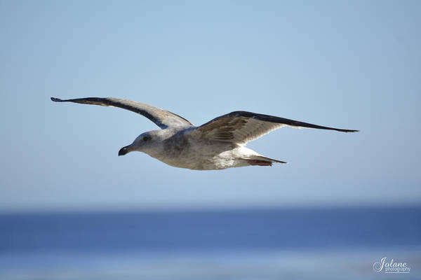 Photograph - Flying by Jody Lane