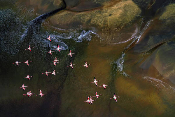 Wall Art - Photograph - Flying Over Lake Magadi - 3 by Raymond Ren Rong