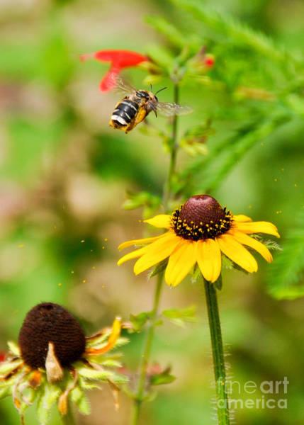 Flying Pollen Art Print
