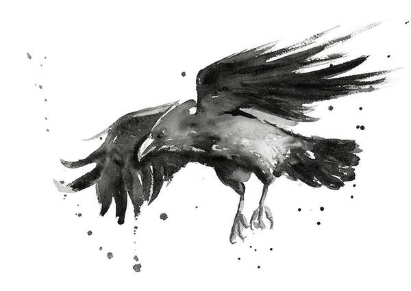 Wall Art - Painting - Flying Raven Watercolor by Olga Shvartsur