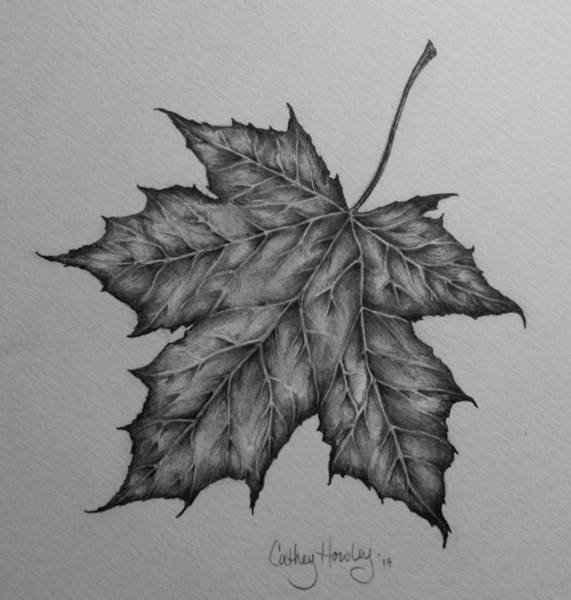 Maple Drawing - Flying Solo by Catherine Howley