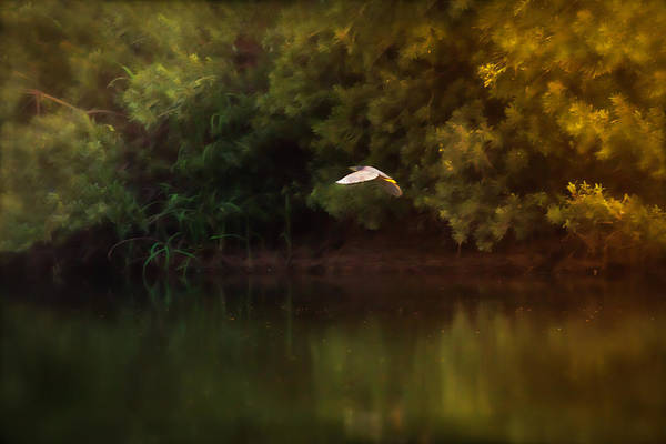 Photograph - Flying Solo by Kim Henderson