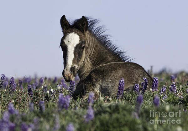 Wall Art - Photograph - Foal In The Flowers by Carol Walker