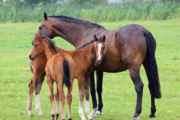 Painting - Foals Equ467398 by Dean Wittle