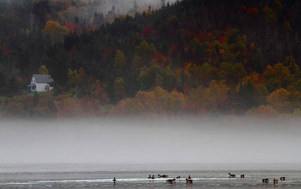 Cabot Trail Photograph - Fog Along The Cabot Trail During Autumn by Jetson Nguyen