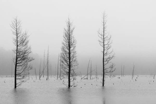 Photograph - Fog And Dead Trees by Denise Bush