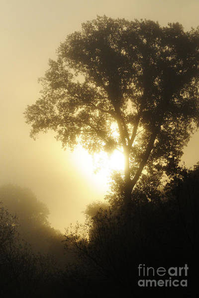 Photograph - Fog At Sunrise by Larry Ricker