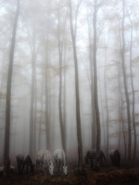 Wall Art - Photograph - Fog by Francesco Martini