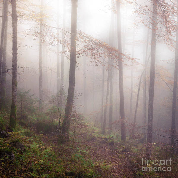 Photograph - Fog In The Forest by Alexander Kunz