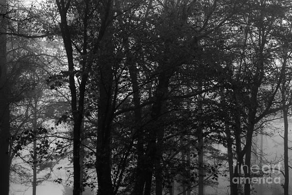 Photograph - Fog In Trees by John F Tsumas