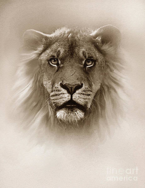 Wall Art - Painting - Fog King Lion by Robert Foster