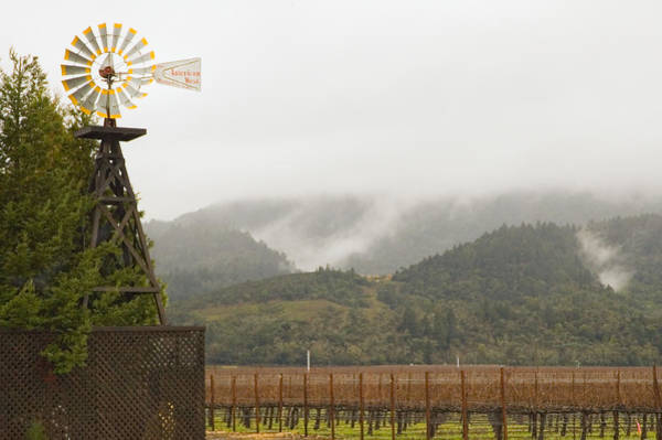 Photograph - Fog On The Vineyard by Mick Burkey