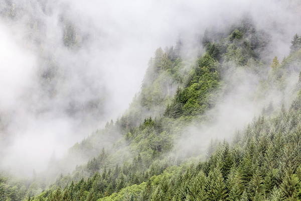 Juneau Photograph - Fog-shrouded Forest Near Juneau by Michael Nolan / Robertharding