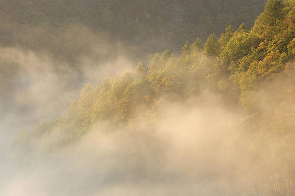 Photograph - Fog, Trees And Hill, View From Cloef by Martin Ruegner