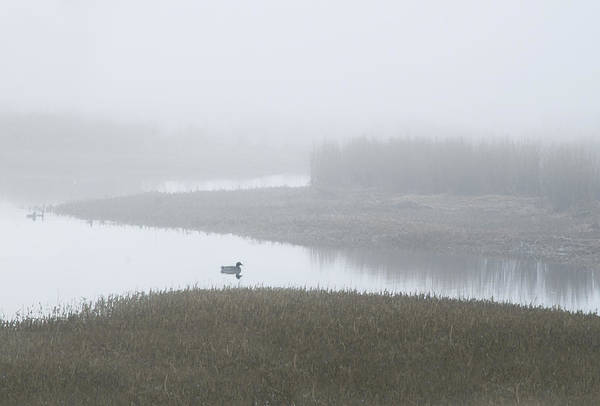Photograph - Fog With Ducks by Rick Mosher