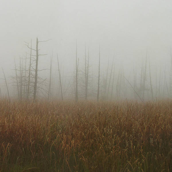Cattails Wall Art - Photograph - Fogged Up Swamp by Francois Dion