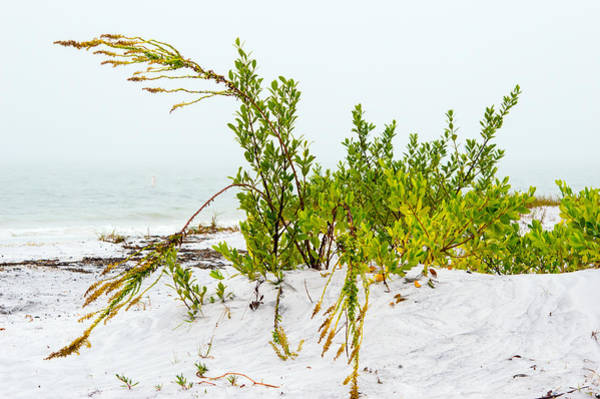 Photograph - Beach Fog 3 by Gene Norris