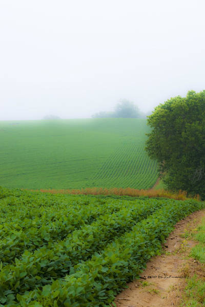 Photograph - Foggy Bean Field by Edward Peterson