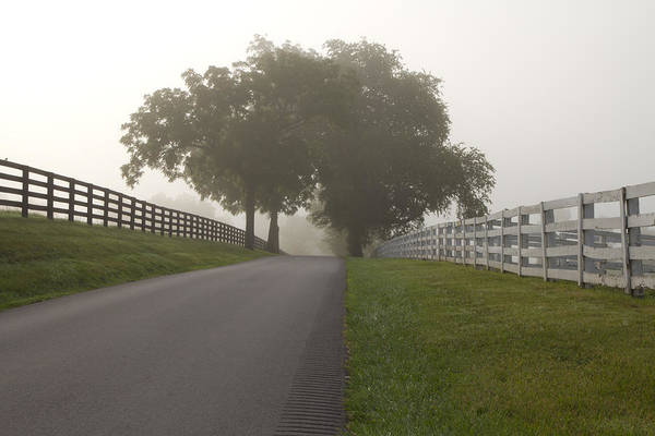 Wall Art - Photograph - Foggy Bluegrass Morning by Heather Kenward