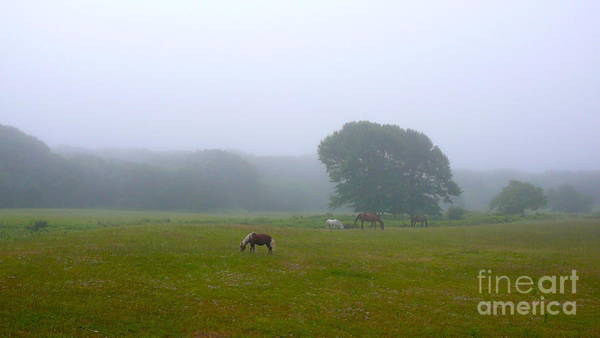 Squid Row Photograph - Foggy Day In Chilmark by Matt Dana