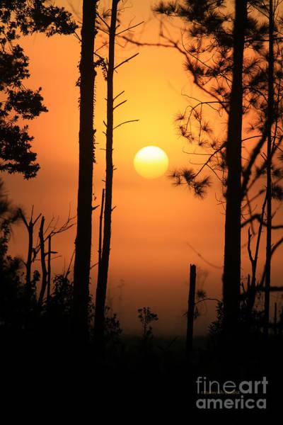 Photograph - Foggy Day Sunrise by Deborah Benoit