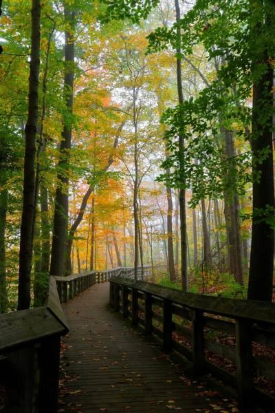 Brian Wilson Wall Art - Photograph - Foggy Fall Path by Brian Wilson